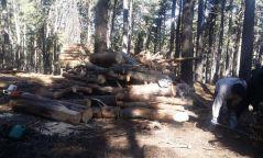 А.Оюут: Богдхан ууланд хууль бусаар мод бэлтгээгүй ой цэвэрлэх ажиллагаа хийсэн
