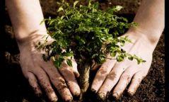 Ирэх бямба гарагт бүх нийтээрээ мод тарина