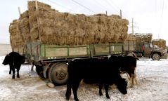 Малын өвс тэжээлийг татвараас бүрэн чөлөөлжээ