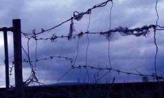 Сар шинийн баяраар 1000 хоригдол түр хугацаанд суллагдана