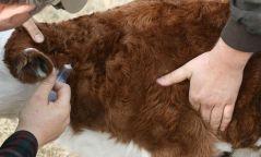 Шүлхийн эсрэг вакцинжуулалт хийгдэж байна