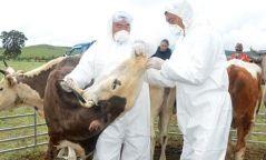Шүлхийгээс сэргийлэх вакциныг аймгуудад хүргүүллээ