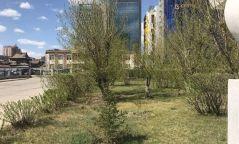 Өнөөдөр бүх нийтээрээ мод тарина