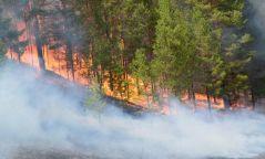 Сүхбаатар, Сэлэнгэ, Төв, Хөвсгөл, Хэнтий аймаг ой, хээрийн түймрийн өндөр эрсдэлтэй