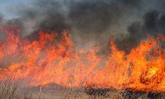 Архангайд түймэр гарч 2 га ой шатжээ