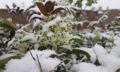 Энэ сарын 27-28-ны өдрүүдэд ихэнх нутгаар эрс хүйтэрч, нойтон цас орно