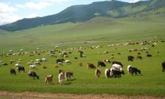 Өнөөдөр Алтай, Хангай, Хөвсгөл, Хэнтэйн уулархаг нутгаар түр зуурын бороотой