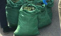 Нийслэл рүү 36.5 кг сэтгэцэд нөлөөлөх ургамал нэвтрүүлэхийг завджээ