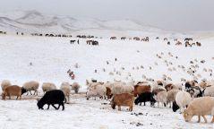 Нутгийн 50 гаруй хувьд цасан бүрхүүл тогтоод байна