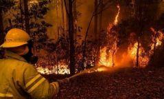"""МУЗН """"Австралийн ой хээрийн түймэрт өртсөн иргэдэд туслах хандивын аян""""-ыг эхлүүллээ"""