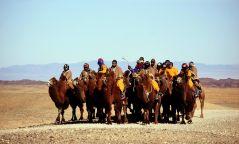 """Монгол тэмээний гайхамшгийг """"GOBI CHALLENGE-2020"""" аялал харуулна"""