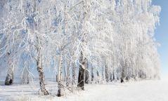 Баруун аймгуудын нутгаар цасан шуурга шуурна