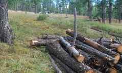Хулгайгаар мод бэлтгэх гэмт хэрэг 50 хувиар нэмэгджээ