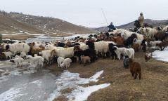 """""""Монгол малчин"""" үндэсний хөтөлбөрийг баталлаа"""