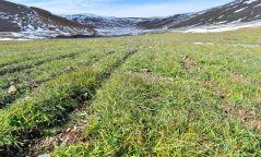 Өвөрхангай аймгийн Уянга суманд 56 га талбайг нөхөн сэргээв