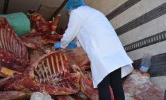 Үхсэн болон өвчтэй малын 20 тонн махыг Нийслэл рүү оруулах гэж байсан нь тогтоогджээ