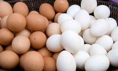 Шувууны гаралтай бүтээгдэхүүнийг хүнсэнд хэрэглэхгүй байхыг анхааруулж байна