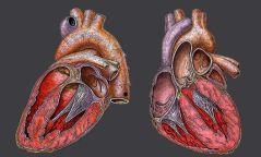 Хүүхдүүдэд зүрхний үзлэг үнэ төлбөргүй хийнэ