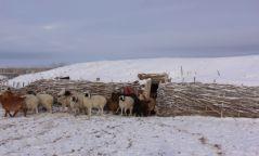 Нийт нутгийн 40 гаруй хувь нь цастай байна