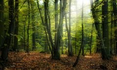 Нийслэлийн ойгоос 2019 онд бэлтгэх модны хэмжээг тогтоолоо