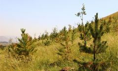 Бүх нийтээрээ хогоо цэвэрлэж, мод тарина