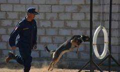 Монгол Улс 7-13 сартай 10 эрэлч нохойтой