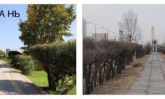 """""""Барс"""" захын арын цэцэрлэгт хүрээлэнгийн 16,000 ам метр талбайн хөрсийг эрүүлжүүлж, 120 мод тарьжээ"""
