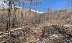 Түймэр, хортонд нэрвэгдэж ургах чадвараа бүрэн алдсан ойд цэвэрлэгээ хийж байна