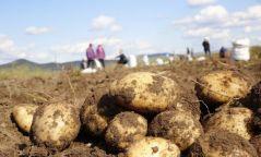 Цаг агаарын хүндрэл учрахгүй бол ургац хураалтыг 26-30 хоногт багтаан дуусгах тооцоо гарчээ