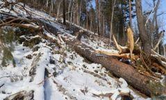 Ойн цэвэрлэгээтэй холбоотойгоор Богдхан уулын дархан цаазат газрын хамгаалалтын захиргаанаас мэдэгдэл гаргажээ