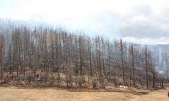 Дорнодын баруун, Сүхбаатарын өмнөд хэсэг түймрийн эрсдэл их буюу аюултай түвшинд байна
