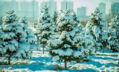 Нэгдүгээр сарын 18-наас ихэнх нутгаар хүйтний эрч суларна