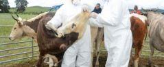 39 суманд малын гоц халдварт шүлхий өвчин дэгдсэн