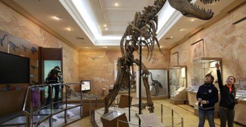 Музейн үйл ажиллагаа эрхлэх тусгай зөвшөөрлийг 8 жилээр олгоно